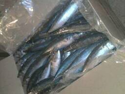 Cвежемороженая рыба из Марокко (сардина, сардинелла, скумбри