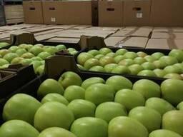 Яблоки из Польши! Apples from Poland! - photo 3