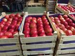 Яблоки из Польши! Apples from Poland! - photo 6