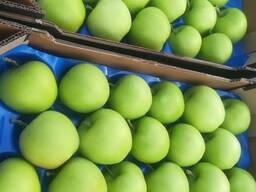 Apple Mutsu Macedonia