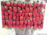 Fresh strawberries - photo 1