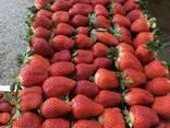 Fresh strawberries - photo 3