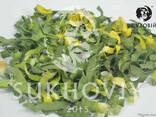 Инфракрасная сушильная камера для продуктов питания Sukhoviy - photo 8