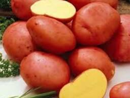 Картофель из РБ