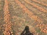 We sell onion - фото 2