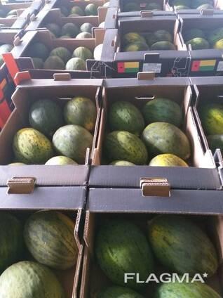 Melon for Export/ Дыня на Экспорт