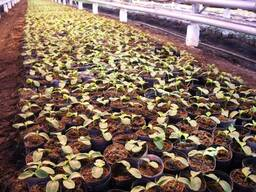 Peat moss for growing seedlings - фото 3