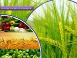 Pestitsiidide tootja ja tarnija kogu maailmas - фото 1