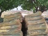 Сорго для производства веников - photo 1