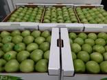 Яблоки - фото 2
